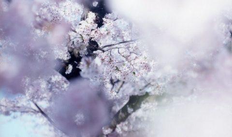 鈴木理策写真集「SAKURA」出版記念 トーク&先行販売イベント