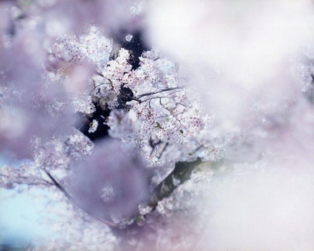 photo: 鈴木理策写真集「SAKURA」出版記念 トーク&先行販売イベント